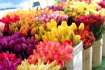 Gorgeous Fresh Cut Wedding Flowers At Wholesale Prices
