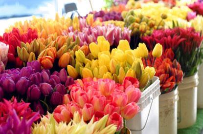 Wholesale Wedding Flowers Buy Bulk Flowers Blaine Florist Anoka