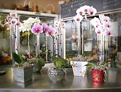 Orchid orchids pot orchid plants how to orchids the flower shop minneapolis - Fabulous flower stand ideas to display your plants look more beautiful ...